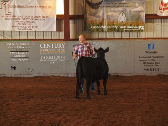 Michaela Greten shows her Angus heifer during the beef show in Hunter Arena on Monday. A veteran, Michaela has 10 years of showing experience at the county fair.  She is a member of the River View High School FFA.
