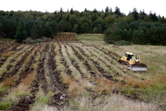 "A bulldozer loosens the soil in a field in Monongahela National Forest, W.Va., on Aug. 27, 2019. ""We literally go in with a giant plow-like machine and rip the guts out of the soil,"" by dragging a 4-foot ripping shank behind a bulldozer, says Chris Barton, a University of Kentucky professor and founder of Green Forests Work. This ""deep ripping,"" as it's known, gives rainwater and tree roots a better chance to push down into the ground."