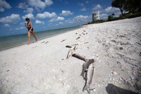 Kathie Dee walks past dead fish at Seagate Beach on Tuesday, Oct. 1, 2019, in Naples. Collier County officials received reports of fish kills Monday as red tide season looms.