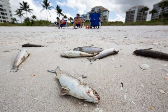 From left to right, Charles Steve, Ryan Stephens, and Jana Stephens, sit on Seagate Beach as hundreds of dead fish line the sand on Tuesday, Oct. 1, 2019, in Naples. Collier County officials received reports of fish kills Monday as red tide season looms.