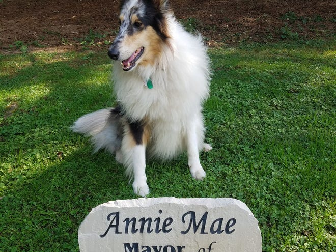 Annie Mae was recently given a plaque honoring her prestigious position in Dry Creek.