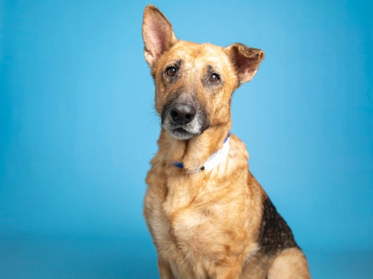 Dakota is available for adoption at the Arizona Humane Society's Campus for Compassion off of 15th Avenue and Dobbins in Phoenix. For more information, call 602-997-7585 and ask for animal number 612042.