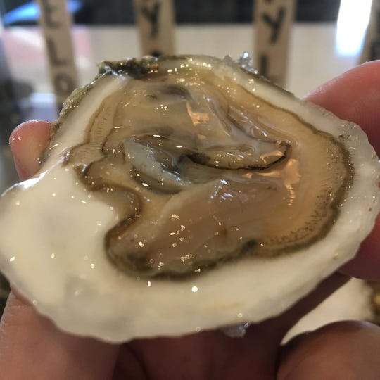 A fresh oyster at Delaware Avenue Oyster House in Beach Haven.