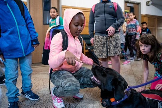 Third grader Angelique Ojeda engages with a therapy dog named Ohana on Wednesday, Oct. 2, 2019 at Prairieview Elementary School in Battle Creek, Mich. Ohana is trained to soothe students and faculty so she can help create a safe space for learning.