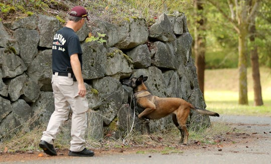 Washington State Department of Corrections K-9 Brava signals to handler Murray Cox that the substance she is looking for is in the rock crevice while running a detection scenario at the Navy's Jackson Park housing complext on Wednesday.