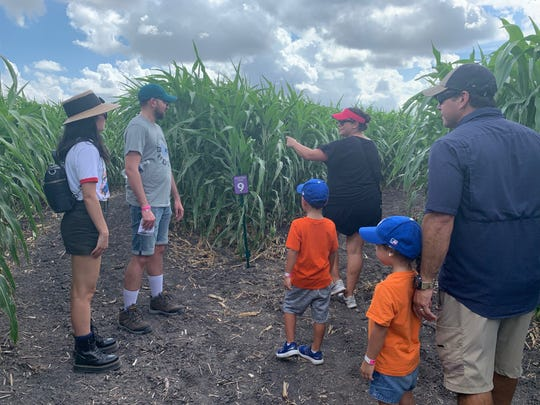 Visitors attempt to navigate their way through the corn mazes at Rockin' K Farms in Robstown on Saturday, Sept. 28, 2019.