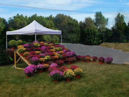 This year's Fall Mums Sale raised$3,000 forthe Knights Charity & Scholarship Fund.