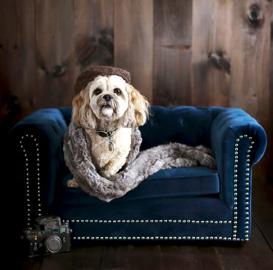 This photo provided by Pottery Barn shows the company's Chesterfield Pet Bed.