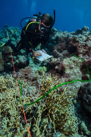 Peter Houk, associate professor at the University of Guam Marine Laboratory, conducts a coral survey to evaluate reef resilience. Assessing coral reef health will be one of the projects funded by a $278,785 grant from the U.S. Environmental Protection Agency recently acquired by the UOG Sea Grant program.