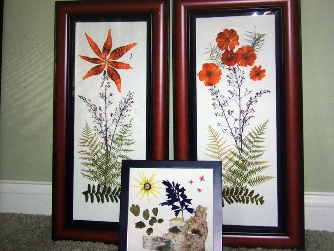 Framed dried and pressed flowers and leaves.