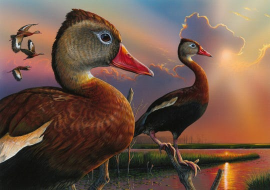 Eddie Leroy of Eufaula, Alabama, won the 2019 Federal Duck Stamp Design Contest with this acrylic painting of black-bellied whistling ducks.