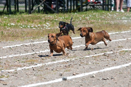 The Great Dachshund Stampede will begin at 10 a.m. at St. Luke's Episcopal Church in La Union, NM.