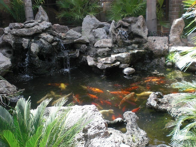 The koi pond at Billy Reed's Restaurant and Bar is one of the few places in Palm Springs where Jews can go to observe the atonement custom of tashlich.