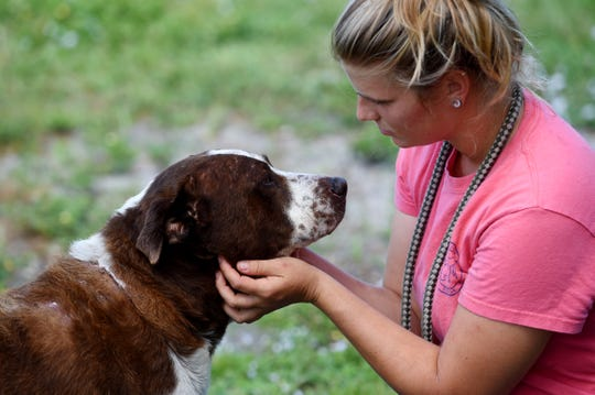 "Dog handler Hailey Nottage scratches the face of Paul, one of 83 dogs rescued from the Bahamas, on Wednesday, Oct. 2, 2019, at the H.A.L.O. animal shelter in Sebastian. ""Paul had it pretty rough during and after the storm,"" Nottage said. ""The injuries he sustained is believed to be from all the chemicals in the water. He seems to be doing better now."" The dogs have finished their two weeks in quarantine and will now visit the veterinarian."