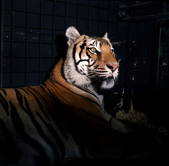 Ming, a tiger who grew up in a Harlem apartment before being rescued in 2003, is buried in Hartsdale Pet Cemetery.