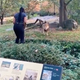 A video shows a woman climbing over a barrier into a Bronx Zoo lion exhibit.