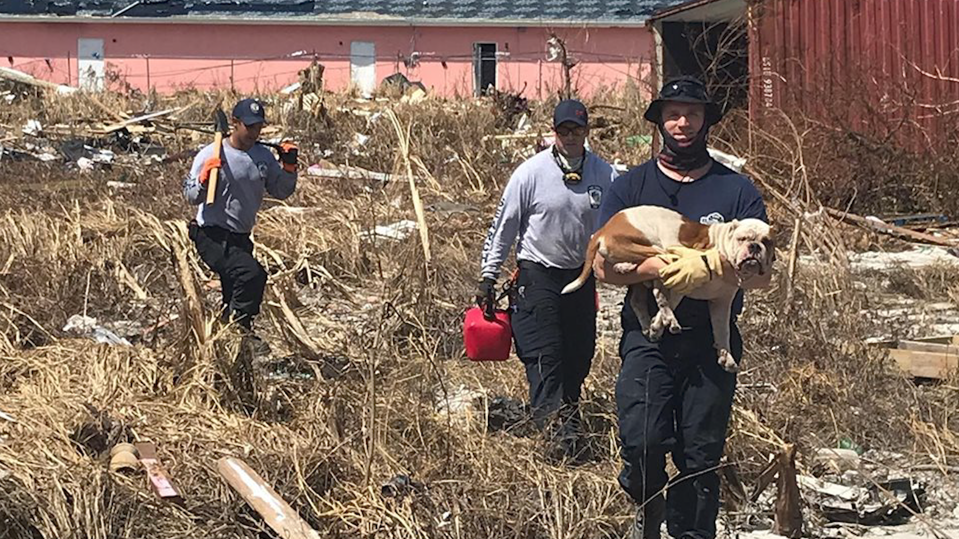 Firefighters rescue bulldog from collapsed building