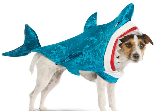 One of nature's fiercest predators? Not with that sweet face. This shark costume sells for $19.99 at PetSmart.