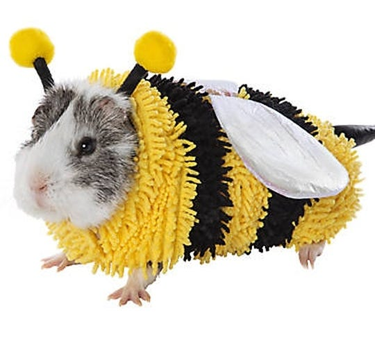 Ahhh...this sweet little Bumble Bee costume can be found at PetSmart for $5.99.