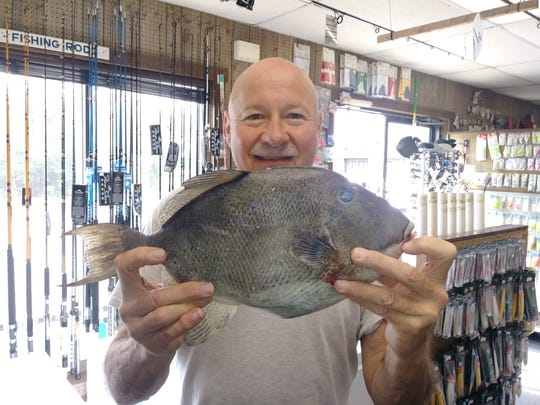 Joel Reda of Brick, holds the 3-pound triggerfish he caught at Manasquan Inlet. He brought the fish to Brielle Bait and Tackle.