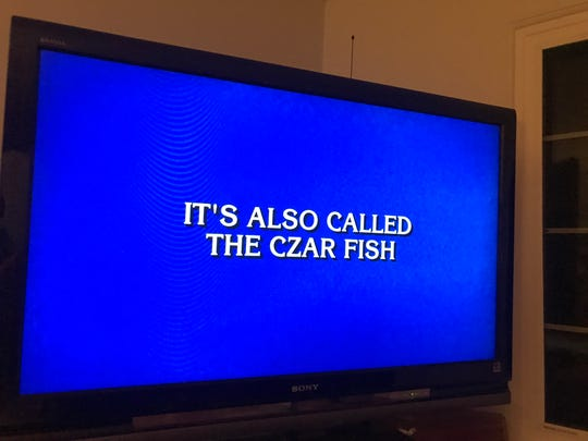 """The Final Jeopardy question on """"Jeopardy!"""" Wednesday, Oct. 2, 2019. The correct answer was """"what is the sturgeon?"""""""