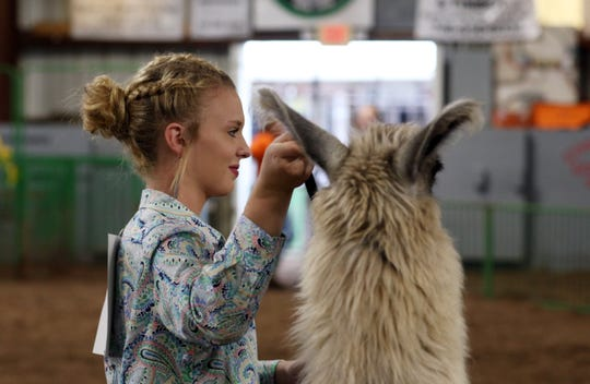 Macey Mizer of Winners 4-H Club was the llama showmanship winner at the 2019 Coshocton County Fair. What the 2020 fair might look like is still up in the air, but local 4-H officials and the fair board are working to keep preliminary project dates on track and deliver a junior fair in some form this year despite COVID-19 pandemic complications.