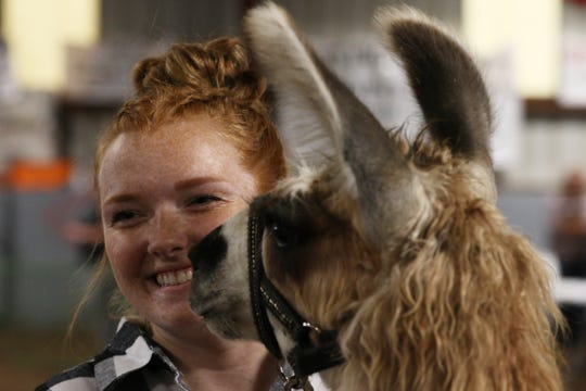 Grace Miller, llama showmanship winner, smiles after a llama took a bite out of her contestant number.
