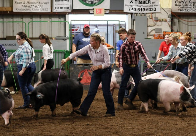 Showmanship winners show hogs during the Showman of Showmen competition at the Coshocton County Fair on Wednesday. Beef showmanship winner Abbey Kellish, center, was the winner.