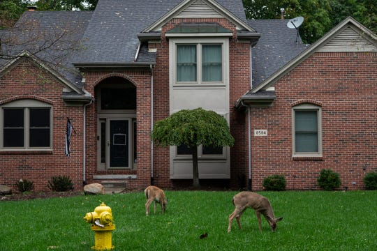 Deer seen in front of a home by Sherwood Drive in Grosse Ile, Wednesday, Oct. 2, 2019.