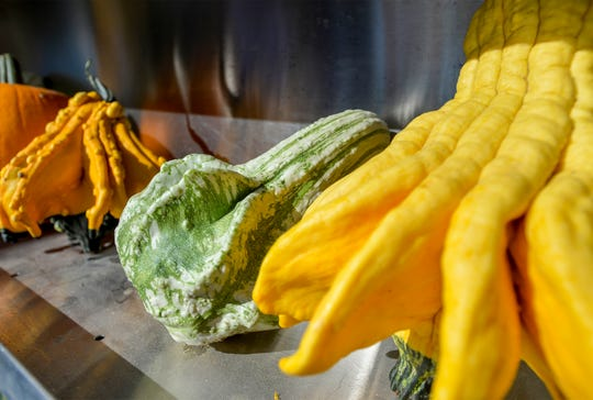 Odd shaped gourds are also available at Jordan's Pumpkins for a Cause fundraiser taking place on Saturday October 5, at the Schroeder family's farm near Vaughn.