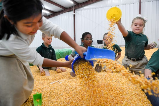 Students from Henderson's Holy Name School try to bury their FFA host Thursday as they got a boost to their agricultural education from Henderson County FFA students at a farm-themed event featuring a corn pit, a petting zoo and lots of games and activities that help kids learn where their food comes from. The event, being held at the archery training building on Garden Mile Road, continues today for other student groups.