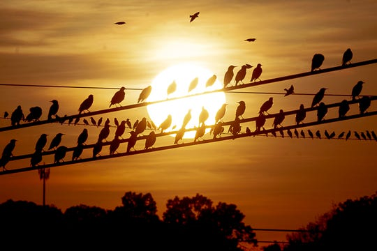 A flock of birds rest on a power line as the late evening sun sets in the distance in Knoxville, Tennessee on Wednesday, October 2, 2019.
