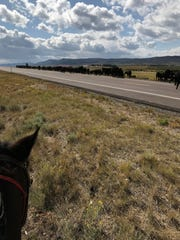 Cattle along a highway in Wyoming are being gathered last month ahead of winter weather.