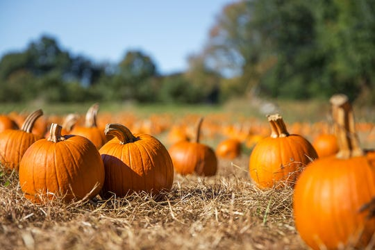 The Ma & Pa Railroad Heritage Village at Muddy Creek Forks will run Pumpkin Patch Excursions Oct. 11 and 12.