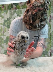 St. Francis Wildlife volunteer Emily Shaw wears a camouflage hood when she interacts with impressionable young wildlife, like this baby barred owl, so they will not become comfortable with humans.