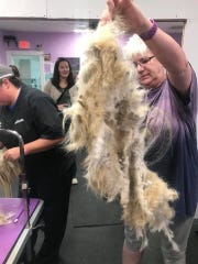 PetSmart groomers shaved several dogs after they were seized from a barn Sept. 26.