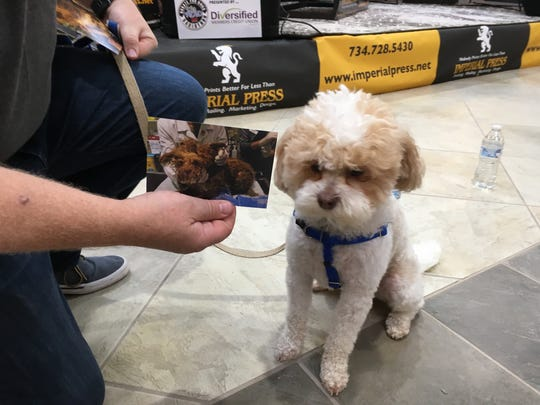 """Owner Chris Boytim shows a """"before"""" photo of Coconut, the Shih Tzu/poodle mix he adopted through Detroit Dog Rescue."""
