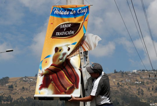"""In this Sept. 28, 2019 photo, a worker installs a banner promoting """"helado de cuy"""" or guinea pig ice cream, in Quito, Ecuador. The rodents are a traditional hot dish in some Latin American countries, including Colombia, Peru and Bolivia. But one vendor is taking things to another gastronomic level, serving guinea pigs as a cold dessert."""