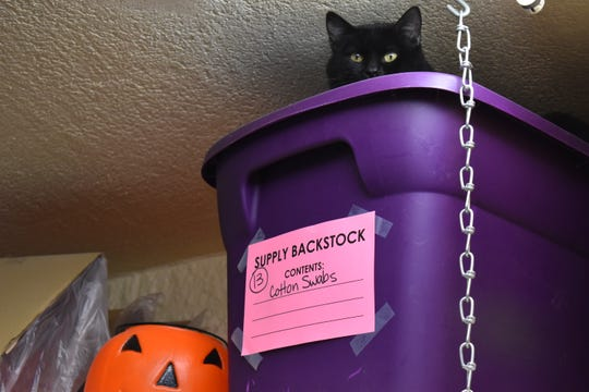 Obsidian, an adoptable cat at the Fort Collins Cat Rescue and Spay Neuter Clininc, finds a cozy nook in the shelter's feline leukemia ward Friday.