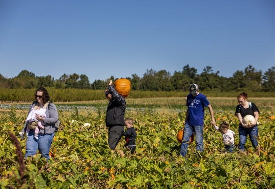 Families make their way through the pumpkin patch on a sunny afternoon at Huber's Orchard & Winery
