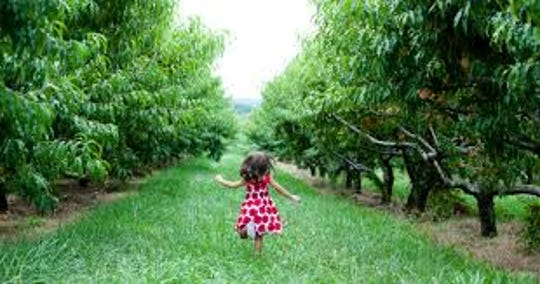 Orchards of Concklin in Ramapo