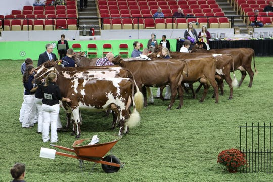 Judges study entrants in the international milking short horns show at Worl Dairy Expo on Oct. 2 in Madison