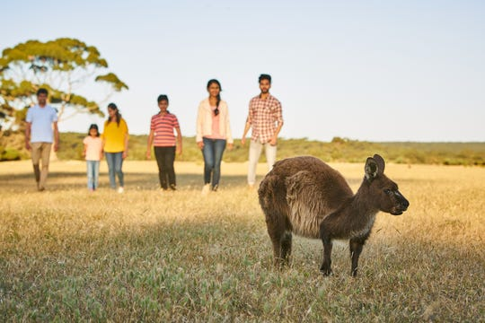 Kangaroo Island, Australia, is home to more kangaroos (60,000) than full-time residents (fewer than 5,000).