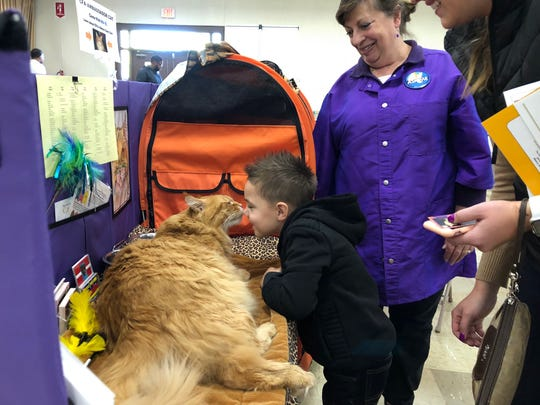 "Margie Smith looks on as her cat ""Mael,"" a 25-pound Maine Coon ""ambassador cat"" greets Braxton, 4, and his mother Abby Fahringer, of Warrington Township, at the Cat Fanciers' Association cat show at the York Expo Center Saturday."