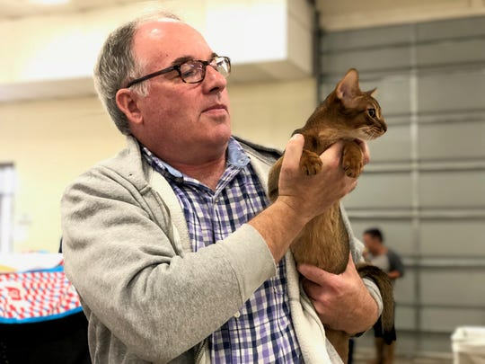 "Matt Baker, of Baltimore, shows 4-month-old Abyssinian cat, ""Wang Chung"" in the cat's second show, at the Cat Fanciers' Association cat show at the York Expo Center on Saturday, Oct. 5, 2019. Baker has been showing cats for 20 years."