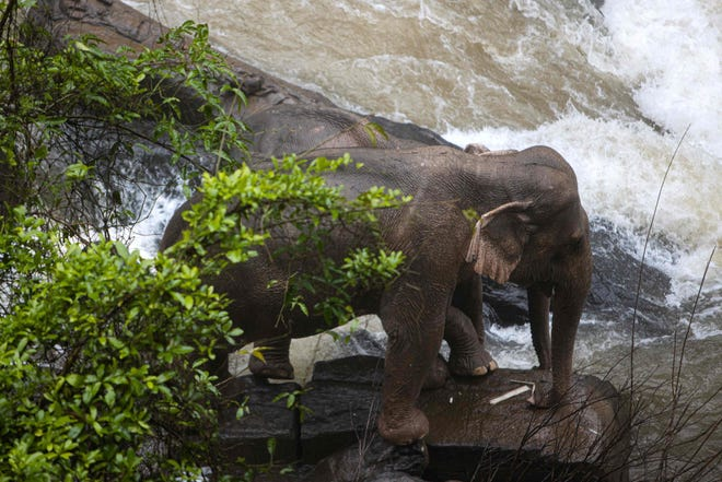 This photo by Thai News Pix taken on October 5, 2019 shows two elephants (one behind the other) trapped on a small cliff at a waterfall at Khao Yai National Park in central Thailand as rescuers work to save them.