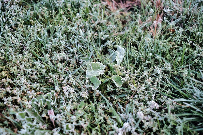 Frost is in the forecast for the Valley this weekend. Photo of a frost covered llawn in Vermont on Oct. 5, 2019.