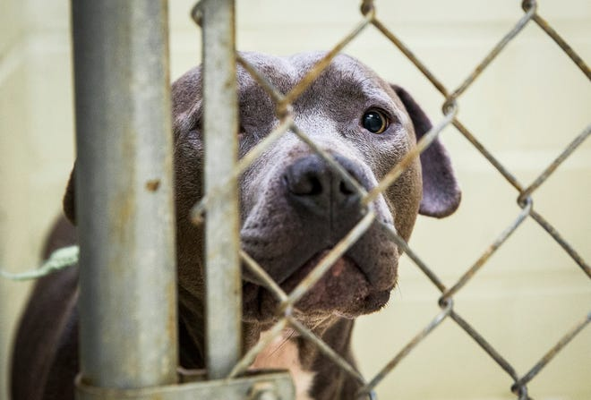"""Muncie Animal Care & Services will hold its second annual """"12 Strays of Christmas"""" 24-hour adoption event on Friday, Dec. 6."""