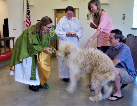 Cirrus, a 1-year-old goldendoodle, is unable to contain himself as The Rev. Carren Sheldon attempts to bless him during an animal blessing Sunday at All Saints' Episcopal Church in Redding.