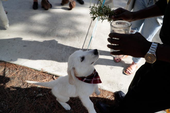 Deacon Joe Bakker splashes holy water on pets during St. John's Episcopal Church's Blessing of the Animals service at Cascades Park Sunday, Oct. 6, 2019.